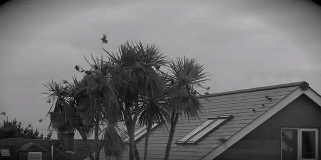 Chris Merrick Hughes – Slow Motion Blackbird